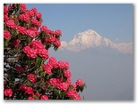 View from Poon Hill (Annapurna)